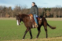 Koń, jazda konna